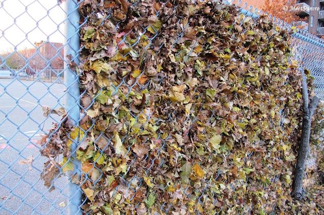 frunze in gard