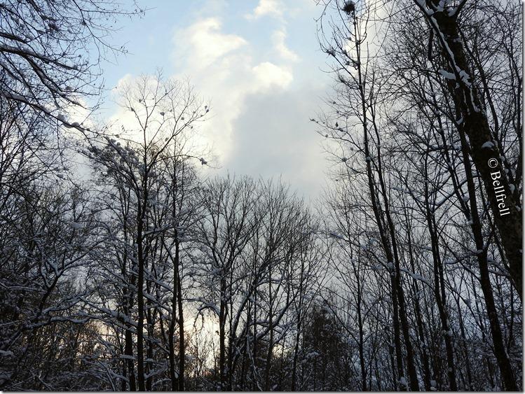 Winterwaldhimmel