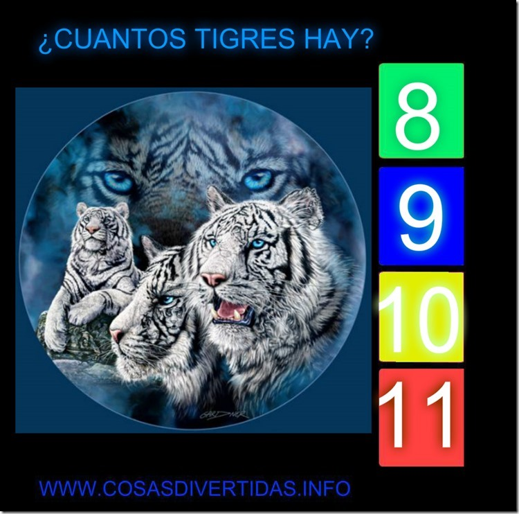 11TIGRES