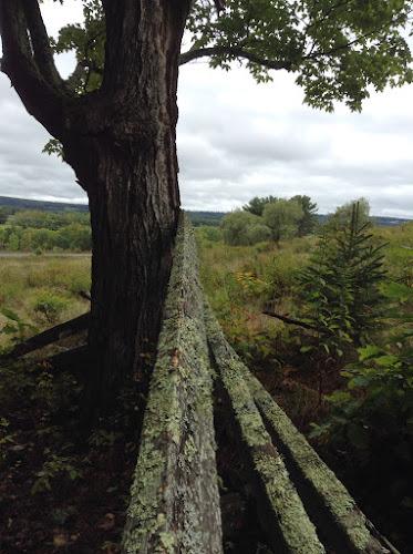 My favourite bit of old moss covered fence. Douglas, New Brunswick