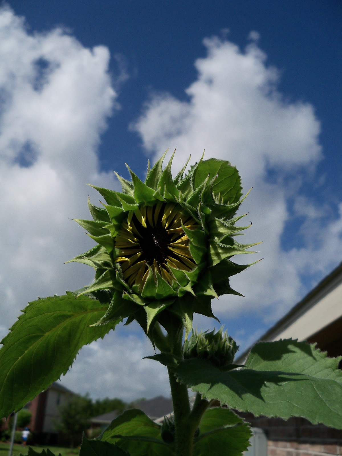 Gardening 2010, Part Three - 101_3849.JPG