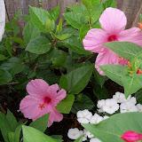 Gardening 2011 - 100_8068.JPG