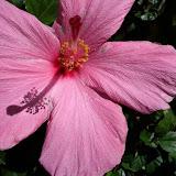 Gardening 2013 - IMG_20130413_110323.jpg