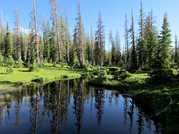 Pond above Lillian Lake