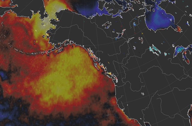 Sea surface temperature anomalies highlight the expansive blob of warm water around Alaska in October 2018. Graphic: earth.nullschool.net