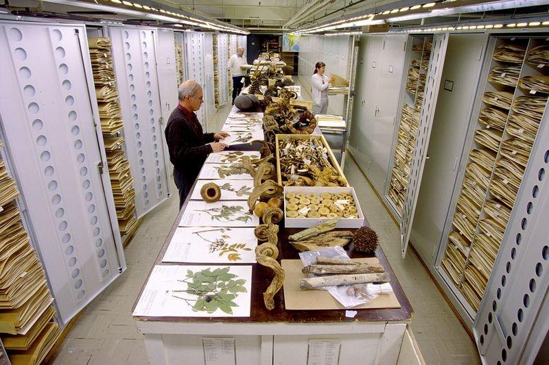 di storia naturale-museo-collezione-3