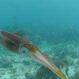 Bonaire 2011 - PICT0092.JPG