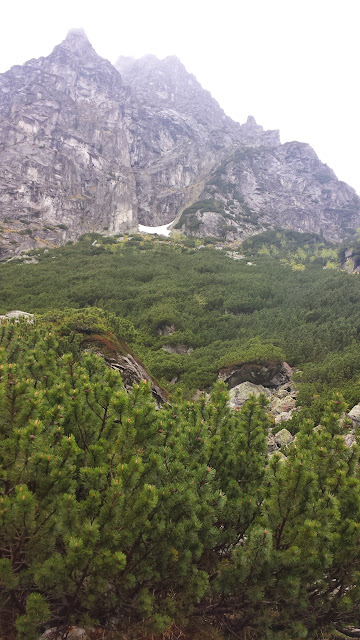 Zajęcia terenowe w Tatrzańskim Parku Narodowym - 2014-06-02%2B14.44.20.jpg