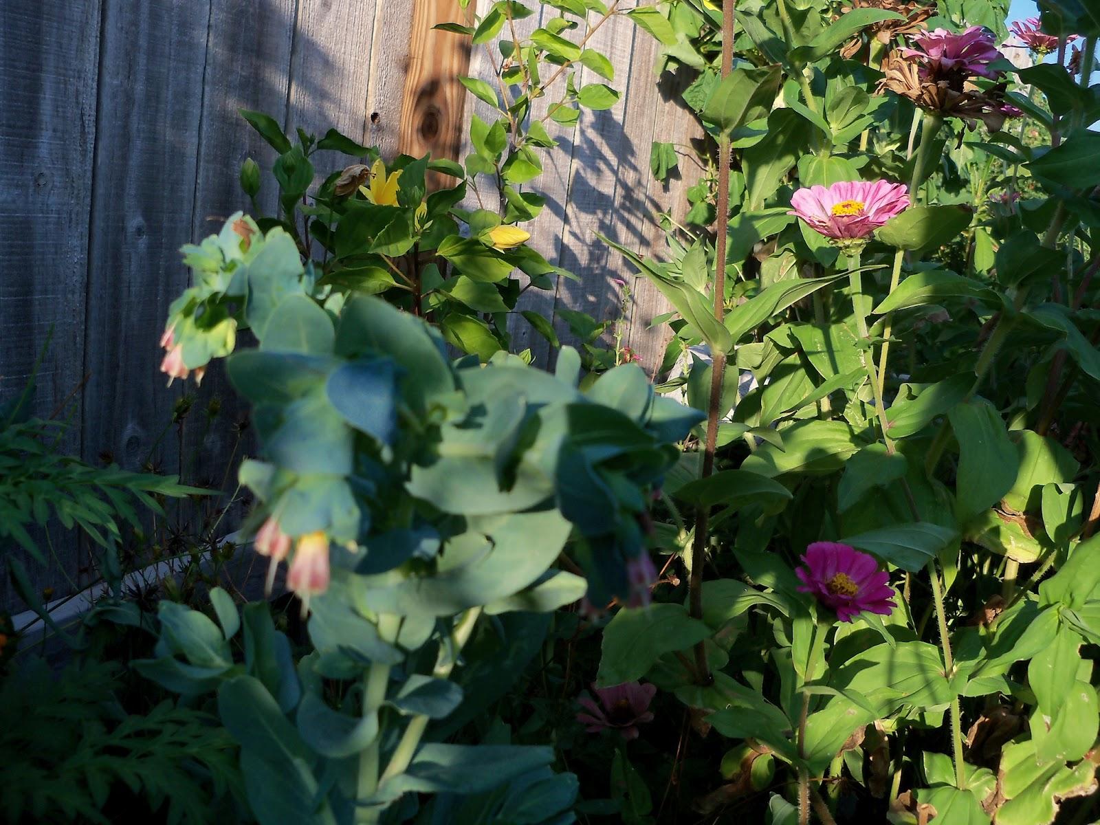 Gardening 2011 - 100_9270.JPG
