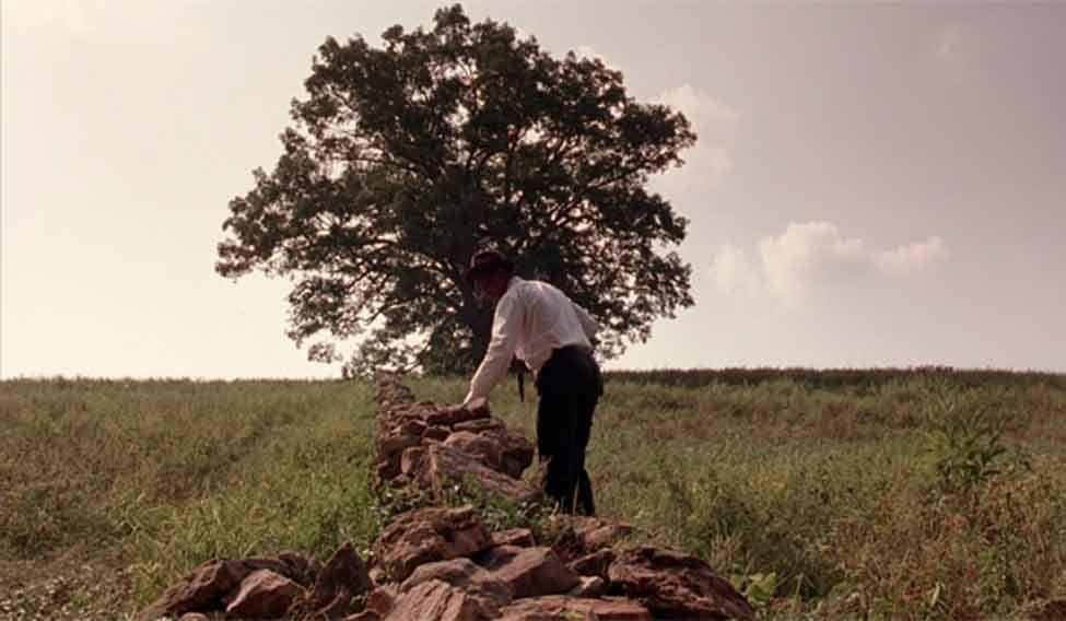 shawshank-tree-1
