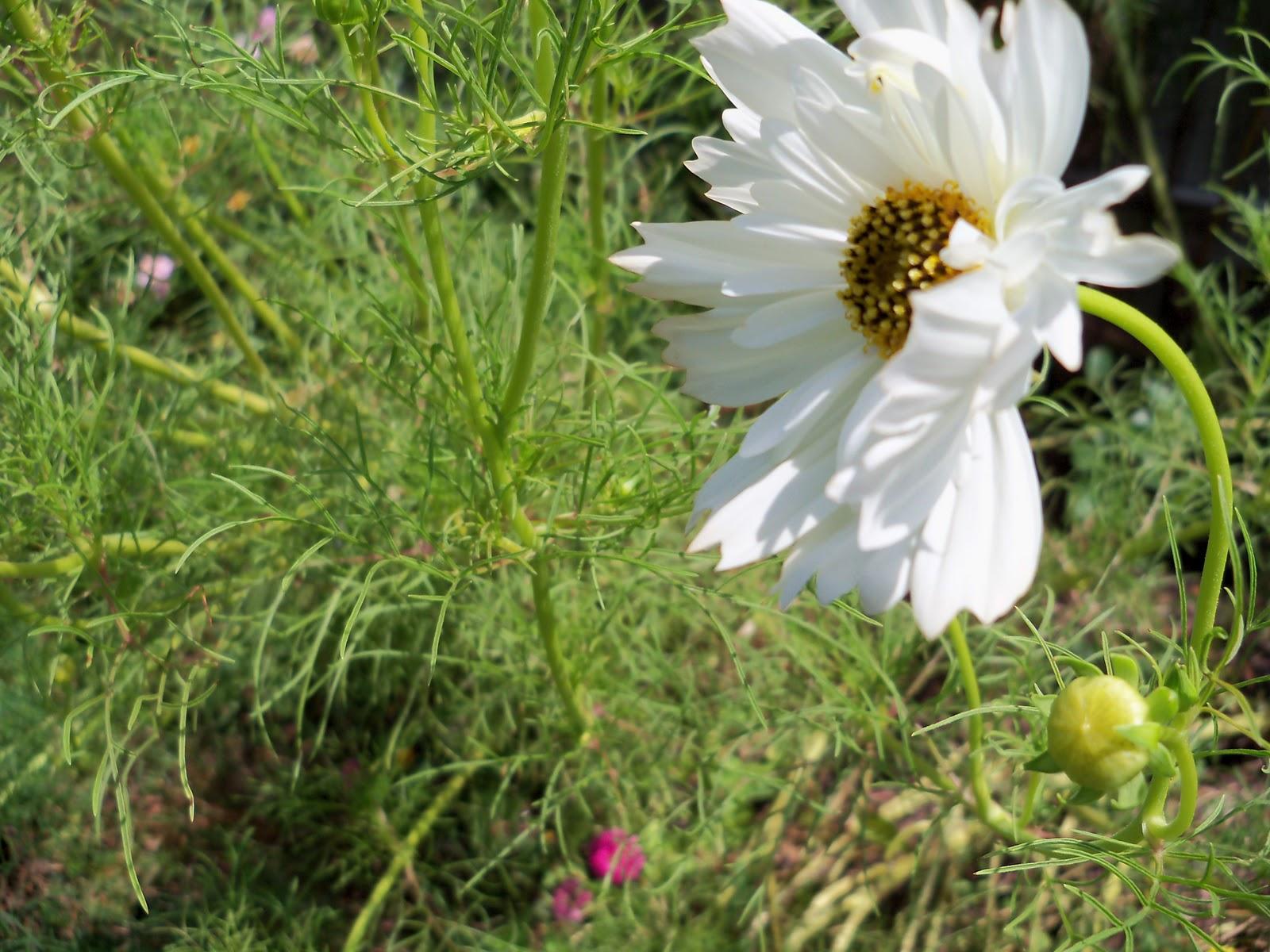 Gardening 2010, Part Three - 101_5076.JPG