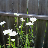 Gardening 2010, Part Three - 101_3804.JPG