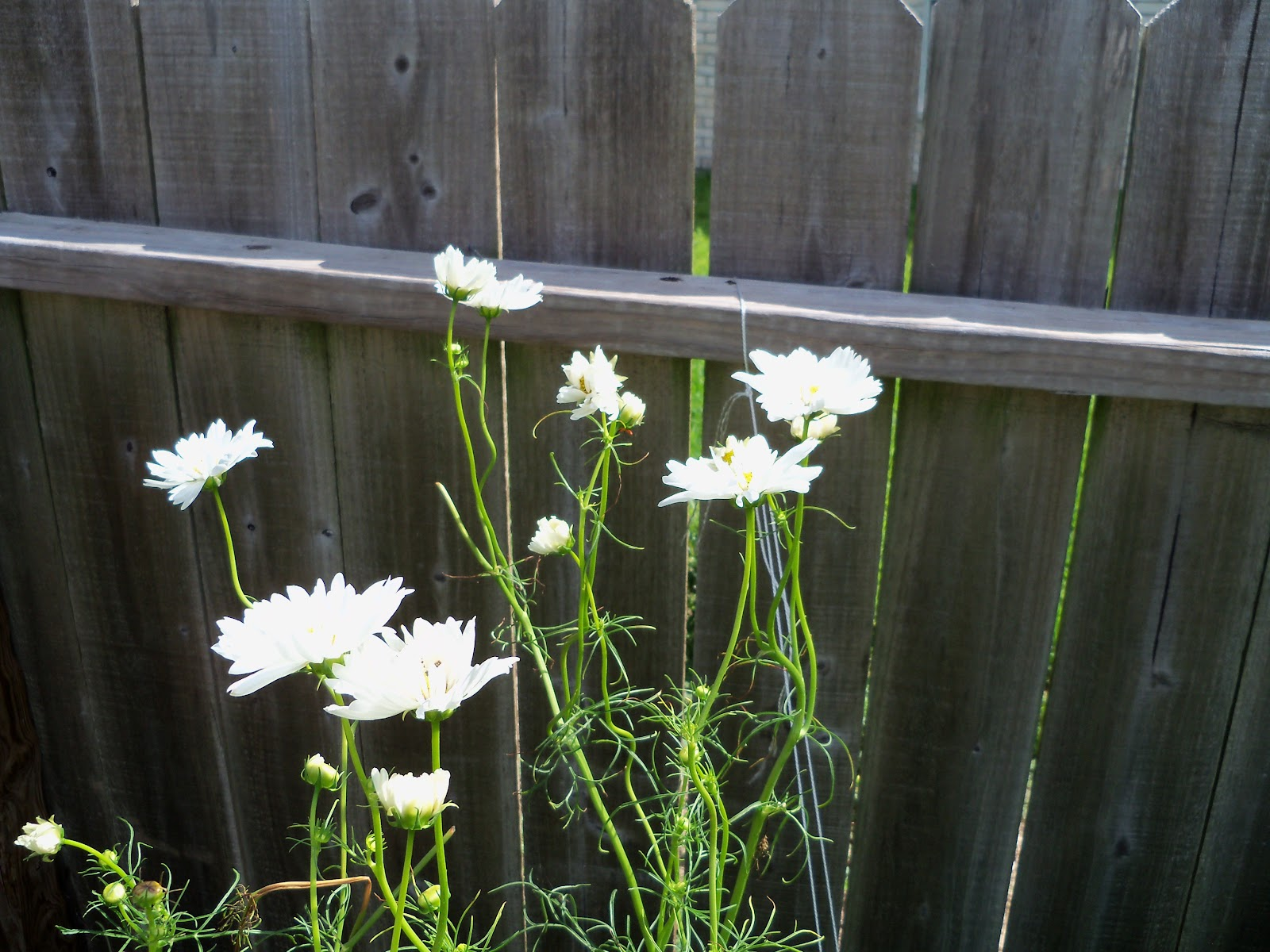 Gardening 2010, Part Three - 101_3804.JPG