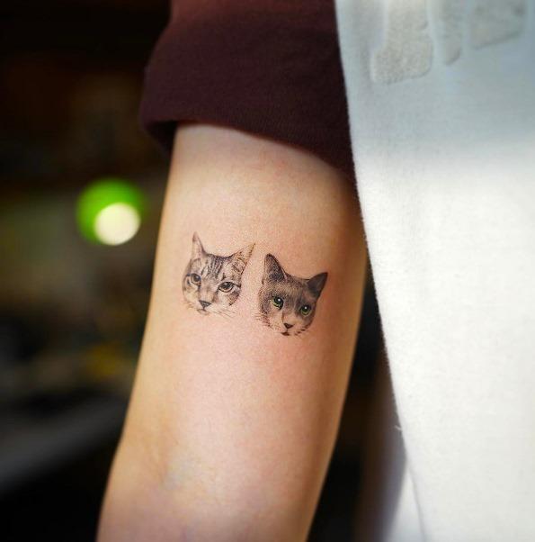 estes_gatos