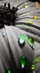 Tears_Of_Rainbow.jpg