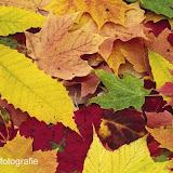 Herfst 2013 - Herfst_2013_006.jpg