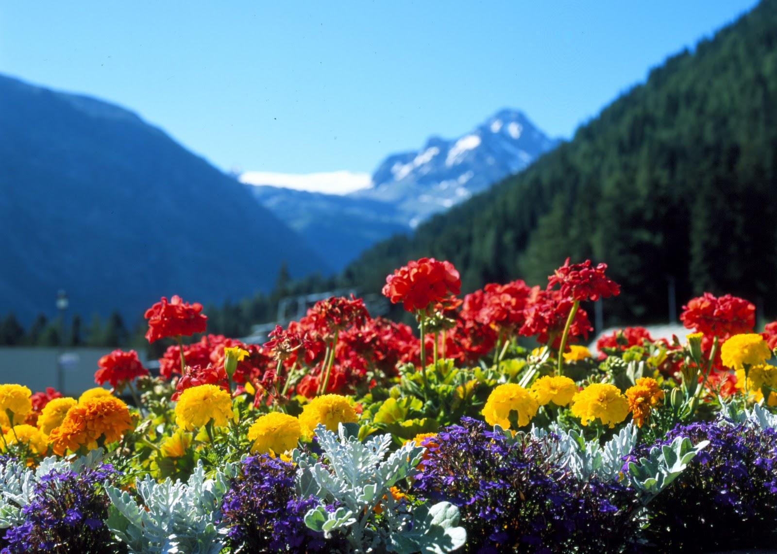 Fiori piante e giardini del mondo il linguaggio segreto for Piante e giardini