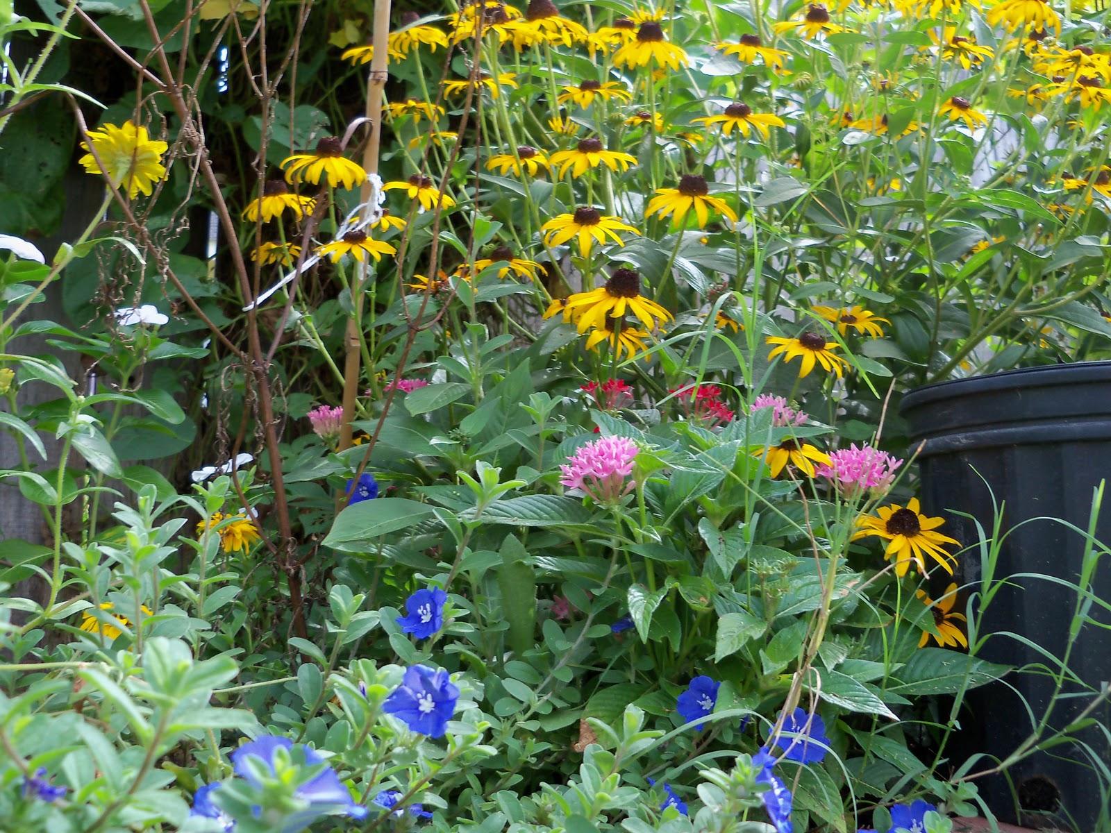Gardening 2010, Part Three - 101_5205.JPG
