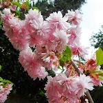 Cvetenje Sakure Društva Touhou - Hinata 2013