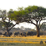 A family of elephants walked by our camp on the first night in Moremi