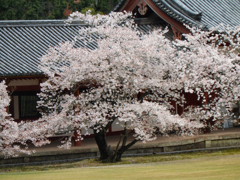 2014 Japan - Dag 8 - tom-SAM_0522-0027.JPG