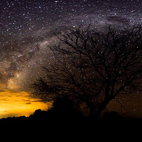 Blaze of glory by Gill Fry - Landscapes Starscapes ( milkyway, tree, night photography, stars, star, night, night shot, panorama, milky way,  )