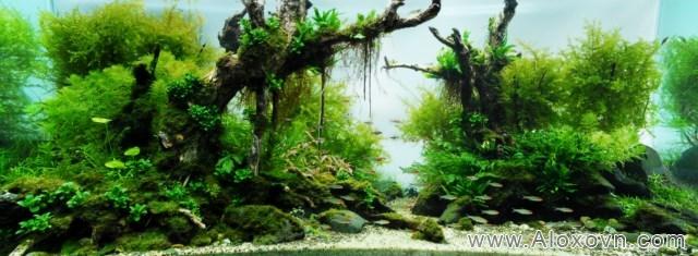 phông nền hồ cá rồng, phong nen ho ca canh 14