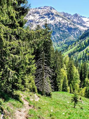 Blick Aufstieg vom EngeratsgundHof zur Käseralpe Hindelang Allgäu