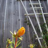 Gardening 2010 - 101_1637.JPG