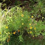 Gardening 2010, Part Three - 101_4998.JPG