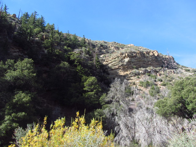 canyon wall encrusted with pines