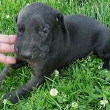 Serena & Jaspers 5-13-12 litter - SAM_3770.JPG