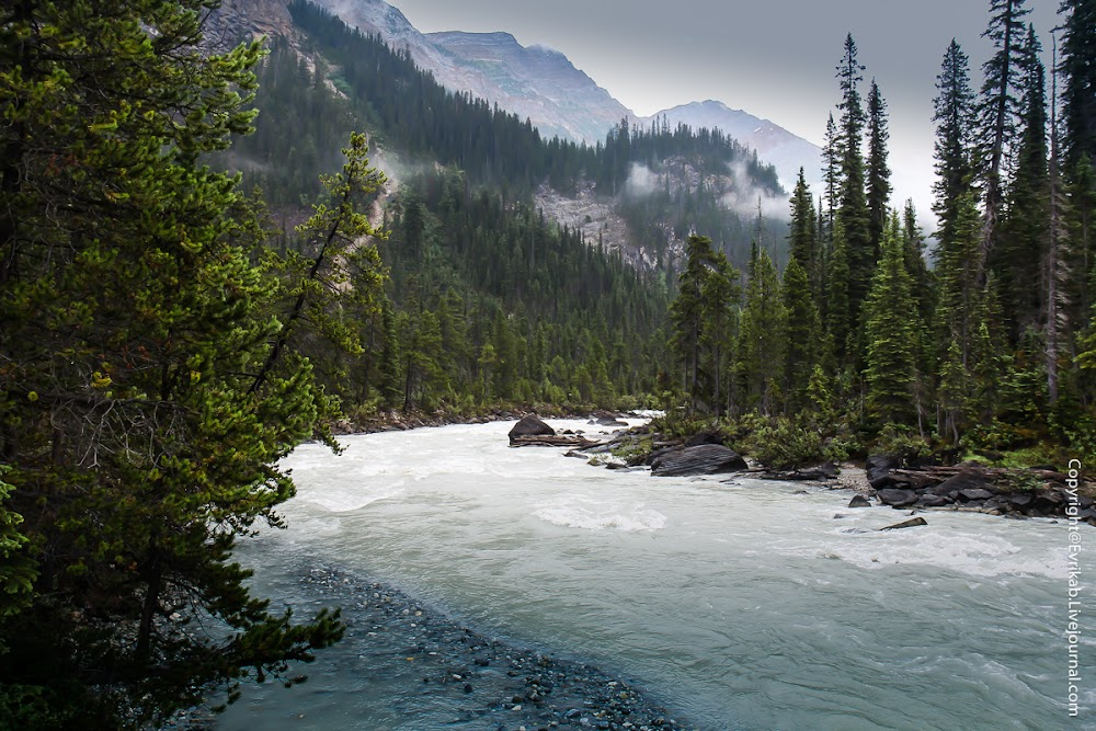 Картинки тайга и река