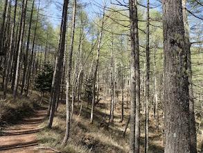 雰囲気の良い森