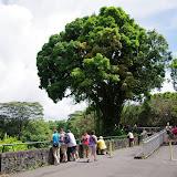 06-23-13 Big Island Waterfalls, Travel to Kauai - IMGP8914.JPG