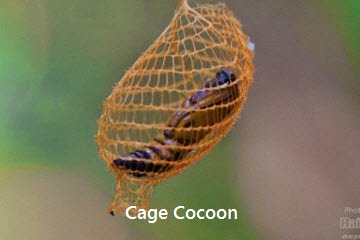 Log House Like Cocoon Of The Bagworm Moth Amusing Planet