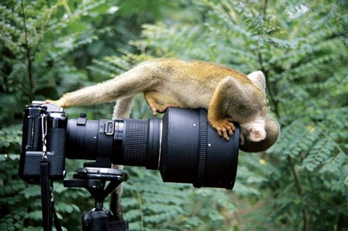 just in time photography of animals