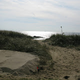 West Wharf Dune Restoration - IMG_8261.JPG