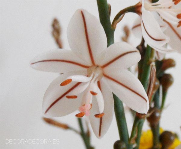 Hacer ramos de flores silvestres