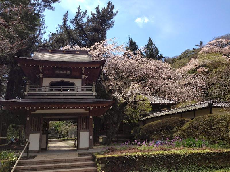 2014 Japan - Dag 7 - maureen-2014-04-05%2B11.50.04-0013.jpg