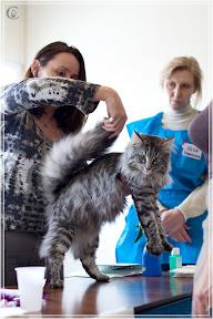 cats-show-24-03-2012-fife-spb-www.coonplanet.ru-054.jpg