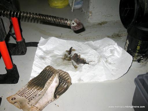 Snake Main Drain