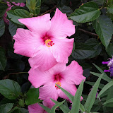 Gardening 2013 - IMG_20130526_103412.jpg