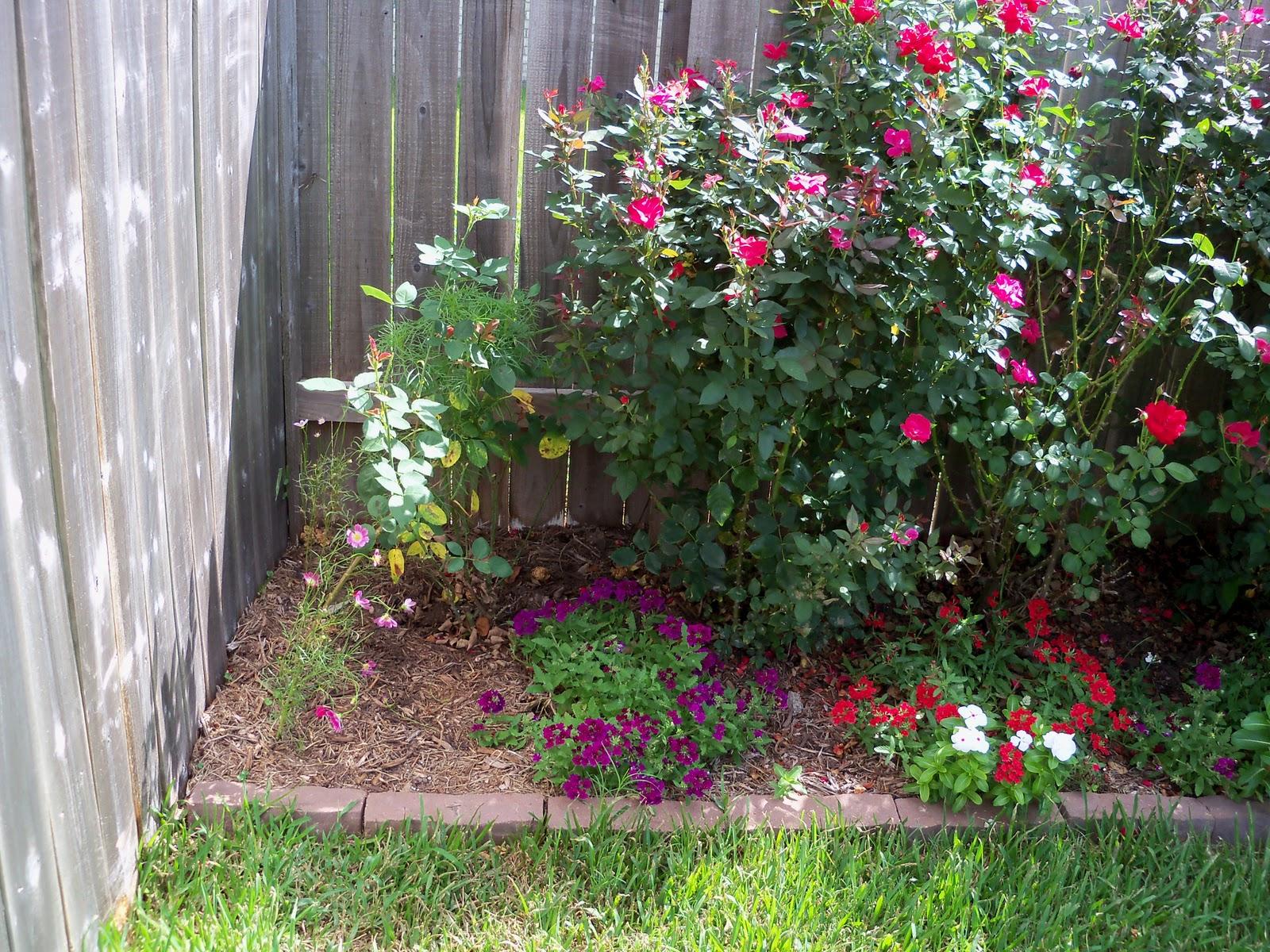 Gardening 2010, Part Three - 101_3820.JPG