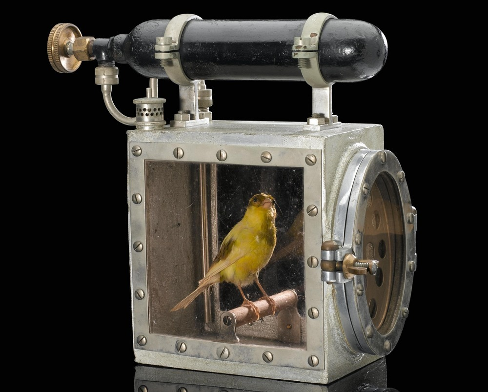 canary-resuscitators-1