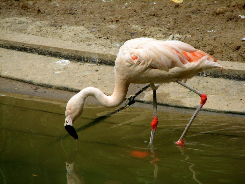 Warszawskie zoo - img_6223.jpg