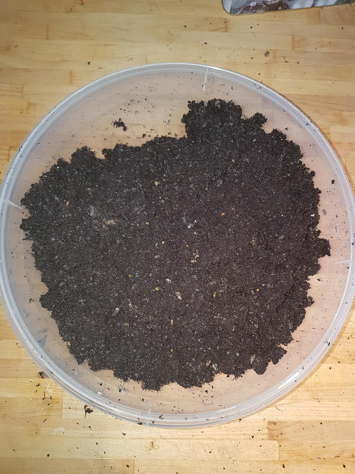 5hugs pflanzen samen selber ziehen inkl life hack. Black Bedroom Furniture Sets. Home Design Ideas