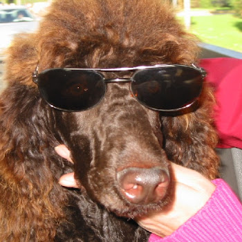 klik op andi zijn foto (reutje) 2008 mandy
