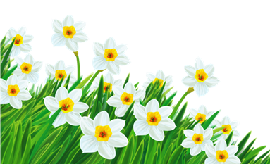 Transparent_Grass_with_Daffodils_Clipart
