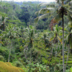 0498_Indonesien_Limberg.JPG